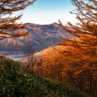 Golden Autumn Sakhalin. — Stock Photo #35083797