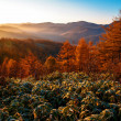 Golden Autumn Sakhalin. — Stock Photo #35083887