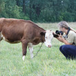 Woman stroking a small calf cows — Stock Photo