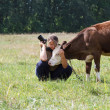 Female photographer pats little calf cows — Stock Photo