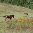 Two horses in the pasture — Stock Photo