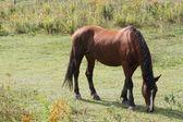 A horse grazes — Stok fotoğraf