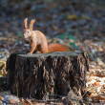Squirrel on a tree stump — Stockfoto #14542591