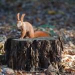esquilo no tronco de uma árvore — Foto Stock