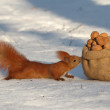 Squirrel runs on snow - Stock Photo