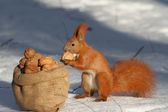 Treats for squirrels — Stock Photo