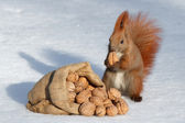 The richness of squirrel — 图库照片