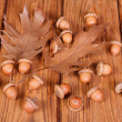 Ripe acorns with autumn oak leaves - Stock Photo