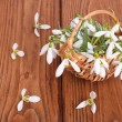 Snowdrops in a basket on the oak table. scattered flowers - Stock Photo