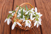 Snowdrops in a basket from a rod against a wooden board — Stock Photo