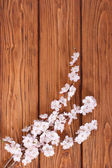 Flowering branch of apricot on background of wooden boards — Stock Photo