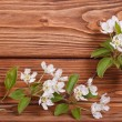 Flower frame of the branches of a pear on a brown wooden board — Stock Photo