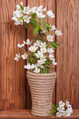 Flowering fruit tree branches in a vase — Stock Photo