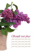 A bouquet of lilacs in a vase isolated on white background. — Stock Photo
