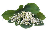 Bouquet of lilies of the valley isolated on white background — Stock Photo