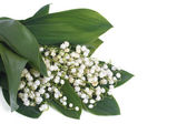 White lilies of the valley with green leaves isolated — Stock Photo