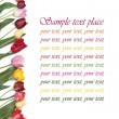 Festive frame colors of tulips on a white background — Stok fotoğraf