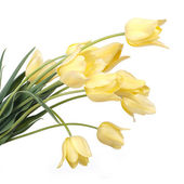 Bouquet of yellow tulips isolated on white background — Stock Photo