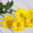 Five yellow daisies on a wooden table — Stock Photo