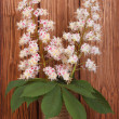 Branch of blossoming chestnut tree in a vase — Stock Photo