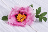 Tree-peony pink flower on a wooden table — Stock Photo