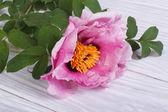 Fleur de pivoine rose sur un gros plan de planche de bois — Photo