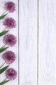 Holiday Decorating frame purple flowers alium — Stock Photo