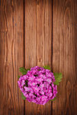 Primrose on a wooden table top view — Stock Photo