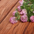 Clover flowers on a brown wooden table - Stock Photo
