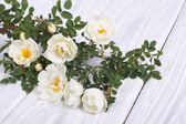 White climbing rose on a wooden table — Stock Photo