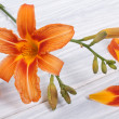 Orange lily on a white background wooden table — Stock Photo
