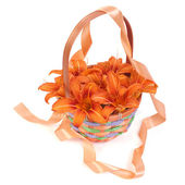 Beautiful orange lilies in a wicker basket decorated with ribbon — Stock Photo
