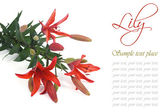 Festive floral greeting card with lilies isolated — Stock Photo