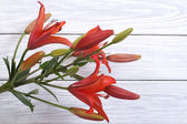 A bouquet of red lilies on a background of wooden board — Stock Photo