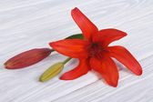 Red lily flower with a bud on a wooden table — Stock Photo
