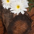 A bouquet of white chrysanthemums on a tree stump. vertical — Stock Photo