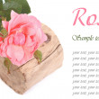 Stock Photo: Pink rose on tree stump isolated on white background