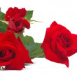 Stockfoto: Bouquet of red roses isolated on white background