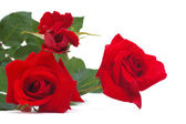 A bouquet of red roses isolated on white background — Stock Photo