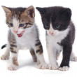 Two little funny kitten isolated on white background — Stock Photo