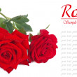 A bouquet of red roses with dew drops isolated on white — Stock Photo