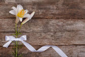 Beautiful festive frame of white lilies with a bow — Stock Photo