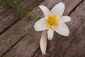 Fragrant white lily flower on old wooden background — Stock Photo