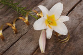 White fragrant lily flower with gold ribbon on the old wooden — Stock Photo