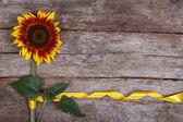 Decorative sunflower yellow flower with a beautiful ribbon — Stok fotoğraf