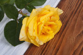 Yellow rose with drops of dew on petals. close-up — Stock Photo