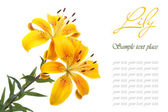 A bouquet of flowers bright yellow lilies isolated on white — Stock Photo