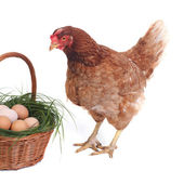 Surprised beautiful brown chicken near the basket with eggs — Stock Photo