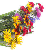 Field colorful flowers isolated on white background — Stock Photo