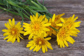 Bouquet of yellow flowers salsify on a wooden table — Stock Photo
